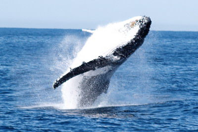 whale_watching.jpg - large